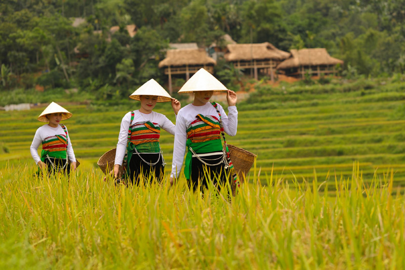 Thai women on terraced rice fields in Pu Luong reserve