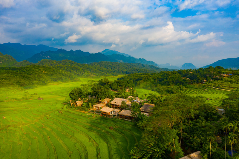 Rice fields on terrace in Pu Luong reserve
